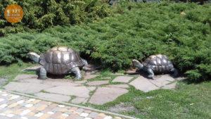 Черепахи возле ресторана Прага