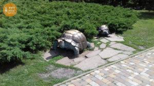 статуи черепах