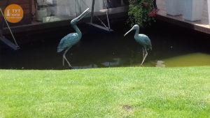 статуи пеликанов
