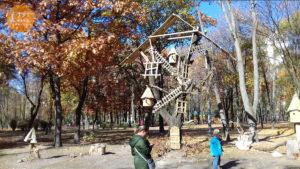 Чудо дерево в парке Интернациональный