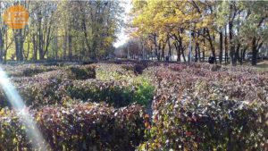 Лабиринт парк Юность