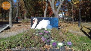 Лебедь в парке Интернациональный