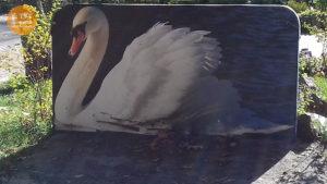 лебедь парк Интернациональный